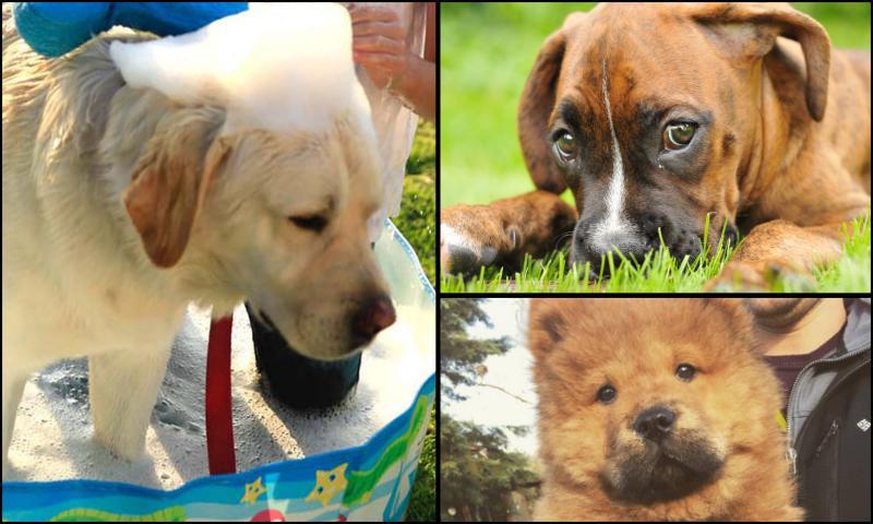 Yavru Köpeklerin Güvenlikleri İçin Gerekli Davranışlar