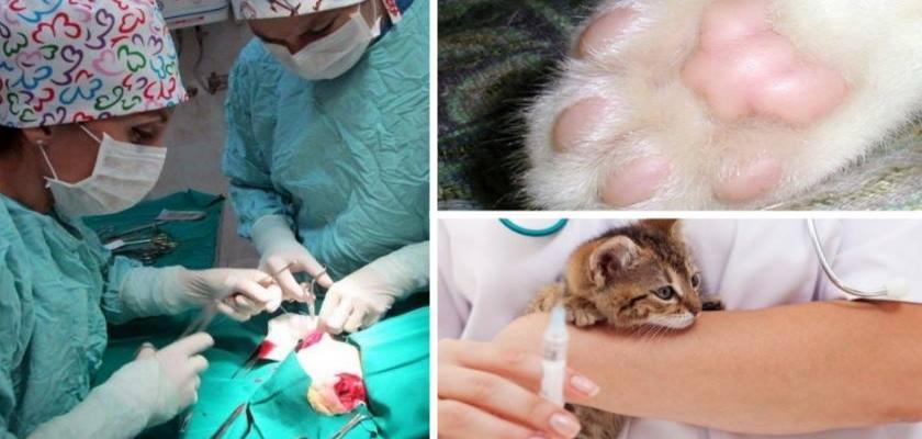 Ameliyattan Sonra Köpeklerde Beslenme